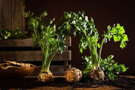 Drinks Table francesco tonelli photography farm to table 65