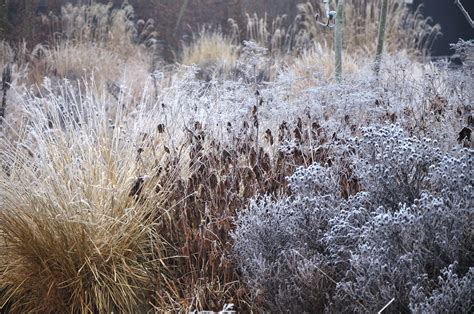 winter backyard expert advice 9 tips for a colorful winter garden gardenista