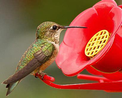 hummingbird nectar c h sugar