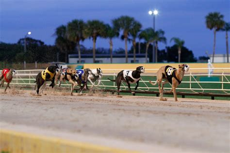 greyhound racing south florida greyhound racing mardi gras casino