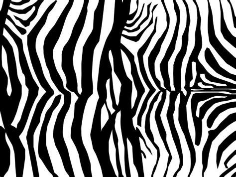 skin pattern of zebra zebra skin print pattern free stock photo public domain