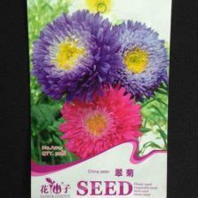 Benih Wortel China benih chrysanthemum ox eye 750 biji mr fothergills