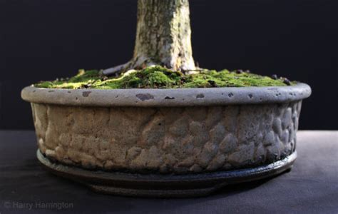 Handmade Bonsai Pots For Sale - hawthorn bonsai progression series