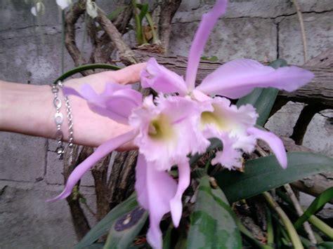 imagenes bellas q tengan nombre daisy nombre cientifico orquideas cuidar de tus plantas es