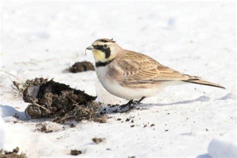 uccelli da appartamento nutrire gli uccelli in inverno consigli utili pollicegreen