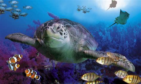 los animales marinos marine 8467535709 wallpaper de animales marinos imagui