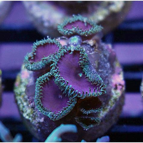 E208 Purple website update new wysiwyg frags price reductions