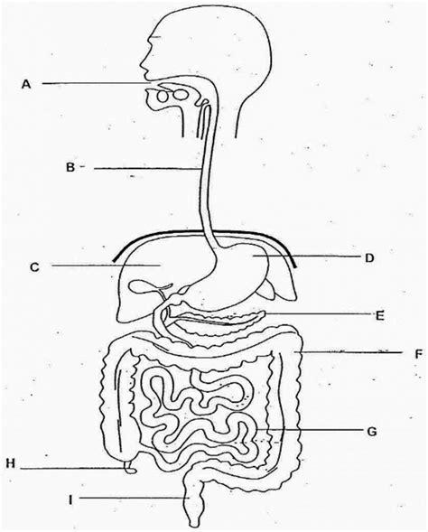 diagram blank digestive system diagram blank anatomy human