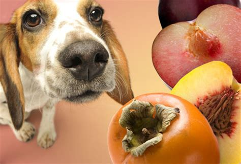 are cherries bad for dogs what dogs should not eat