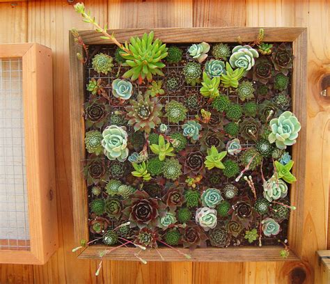 Succulent Vertical Garden by Supporting Local Businesses Succulent Gardens Local Nomad