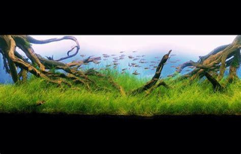 Aquarium Design Basics   the basics of a planted aquarium pethelpful