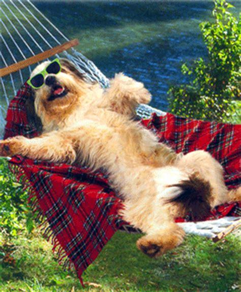 dog friendly beach house pet friendly hilton head island sc pets are welcome