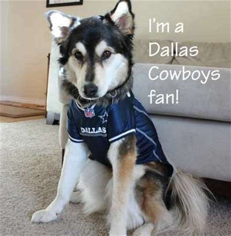 best dogs in dallas football jerseys at pet store with our best denver lifestyle