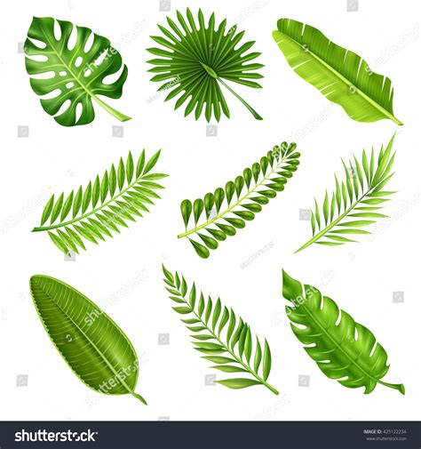 Collection Green Decorative Elements Realistic Style Stock Vector 425122234 Shutterstock Tree Collection Of Design Elements Stock Vector Illustration Of Icon Botany 32428346