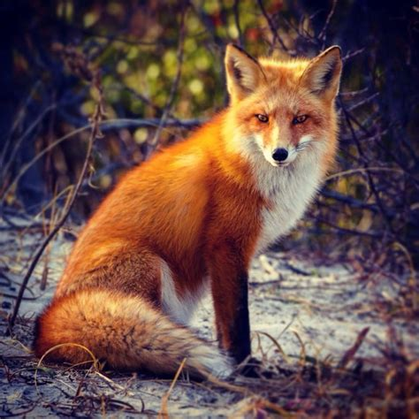 is a fox a tweets with replies by for fox sake kevingfox