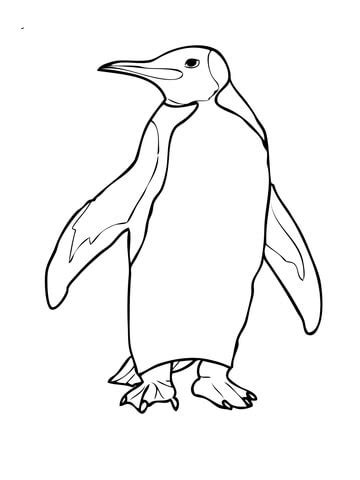 royal penguin coloring page coloriage manchot royal coloriages 224 imprimer gratuits