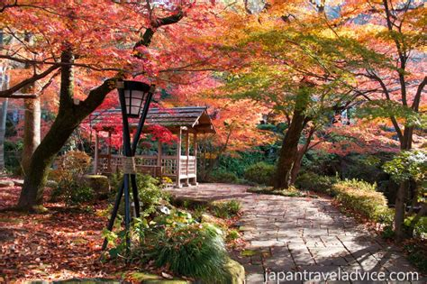 november tokyo autumn colors forecast 2016 in japan japan travel advice
