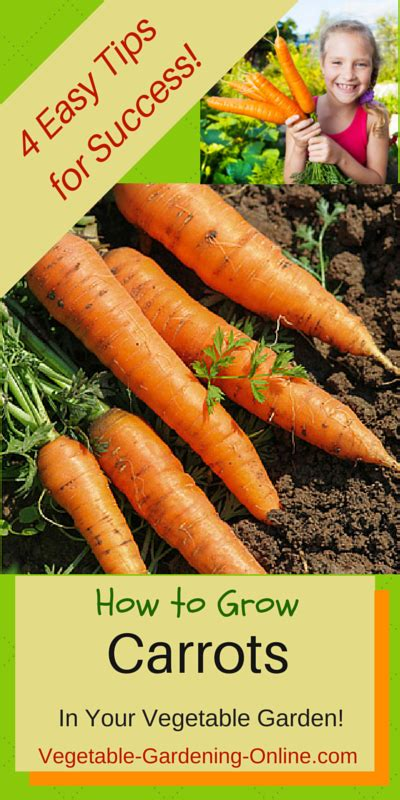 easy tips  growing carrots