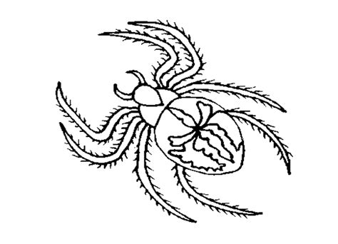 black spider coloring pages  animals