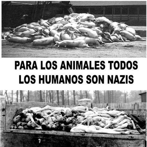 imagenes veganas fuertes protecci 243 n animal 191 ser vegetariano o vegano es ser radical