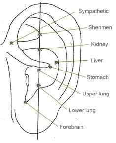 How To Start My Nada Detox Circle by 1000 Images About Auricular Acupuncture On
