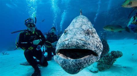 dive great barrier reef liveaboard
