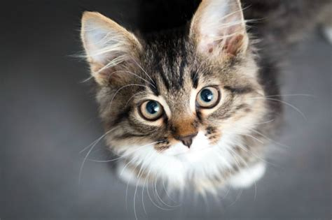 cat rage room the strange link between parasites cats and explosive
