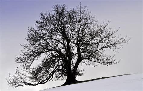 define tree high definition wallpaper of tree wallpaper of winter