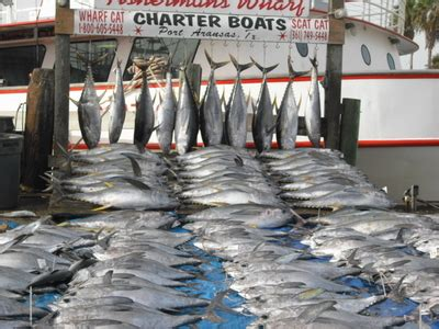 scat cat fishing boat texas party boats fishing la waters thread closed the