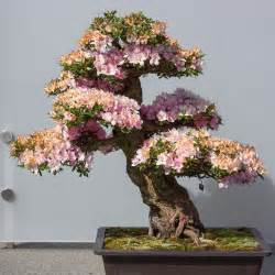 Bonsai Pink pink bonsai flowers the bonsai aesthetic