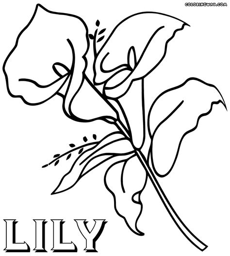 coloring pictures of lily flowers lily coloring pages coloring pages to download and print