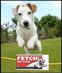 jumping dog   fetch pet care  pittsburgh pa