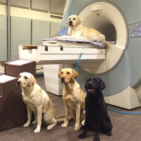 practical fmri the nuts bolts functional mri of