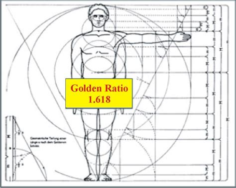 ratio diagram 93 best images about golden ratio on the
