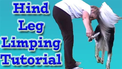 dogs back legs not working amazing trick limp with the hind leg clicker trick