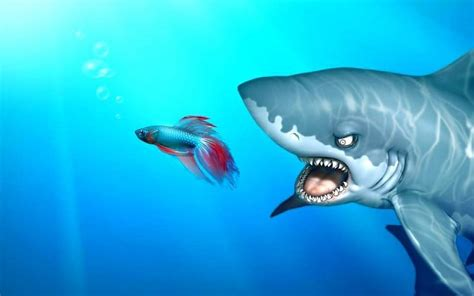 imagenes para fondo de pantalla de tiburones tiburones de windows divertidos animales marinos