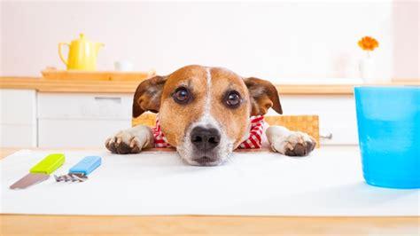 alimentazione x cani alimentazione consigli da seguire errori da