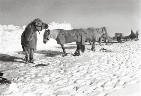 the south pole ponies what the race to the south pole can teach you about how to