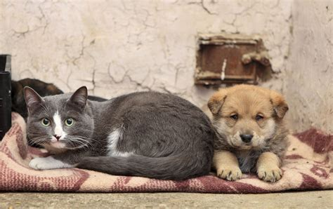 puppies and more rescue rescue me adopt dogs cats and more autos post