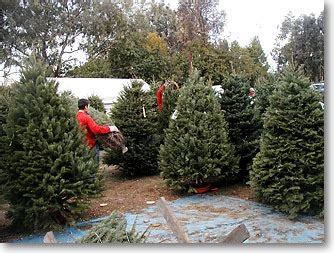 contact christmas ranch tree farms
