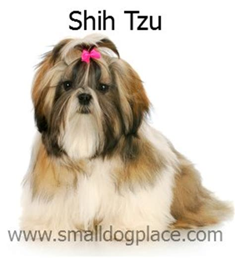 shih tzu shedding puppy coat small non shedding dogs 3 breeds n through z