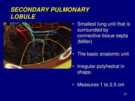 secondary unit technical aspect of hrct normal lung anatomy hrct