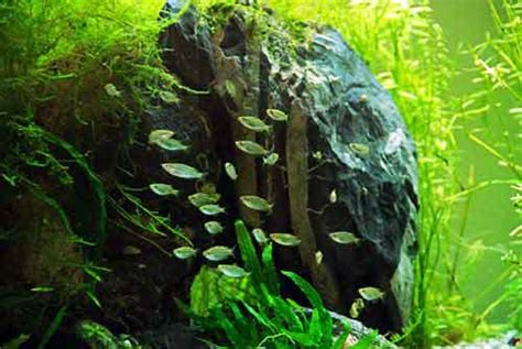 aquascaping materials aquarium ornaments a guide to wood rocks and decor in