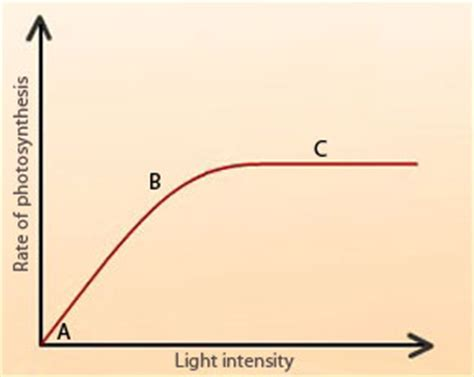 How Does Light Intensity Affect Photosynthesis by Factors Affecting The Rate Of Photosynthesis Pass