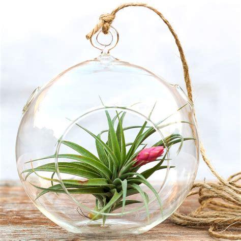 Em Water Spray Air Kesehatan N Kecantikan U Keluarga 10 indoor plants you can t kill stuck on you