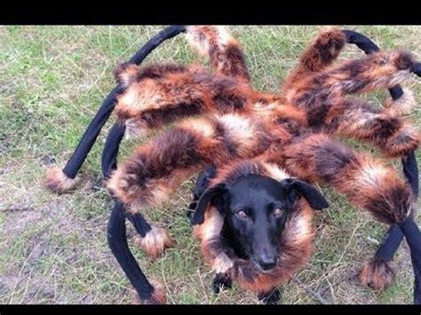 spider puppy mutant spider prank sa wardega review