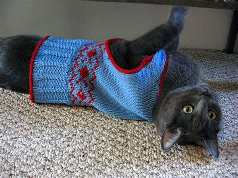 knitting pattern cat clothes knit a sweater for your cat free patterns grandmother