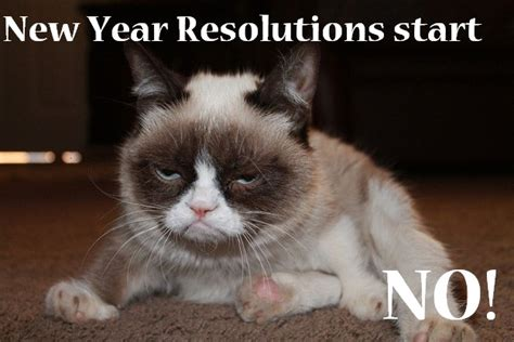 grumpy cat new year happy new year pf plague