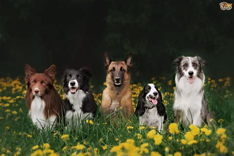 different dogs 22 interesting facts about different breeds pets4homes