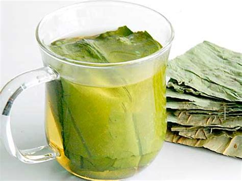 lotus leaf tea benefits buy lotus tea benefits how to make side effects